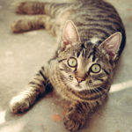 """Pet Psychic - Carole Ramsay - GoddessTouch.net"""
